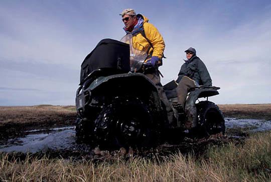 Snowy Owl, (Nyctea scandiaca) Denver Holt and Laura Phillips on tundra trail heading to nest site. Barrow, Alaska