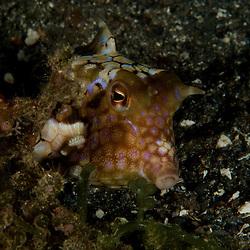 Dive Spot: Algae Patch