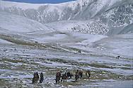 Mongolia. horse riding in winter in the snow in the height lakes area  ovokangai       /  randonnée a cheval en hiver dans la neige vers le col sur le chemin des huit lacs,   ovokangai  Mongolie   /          P119773 / landscape / paysage