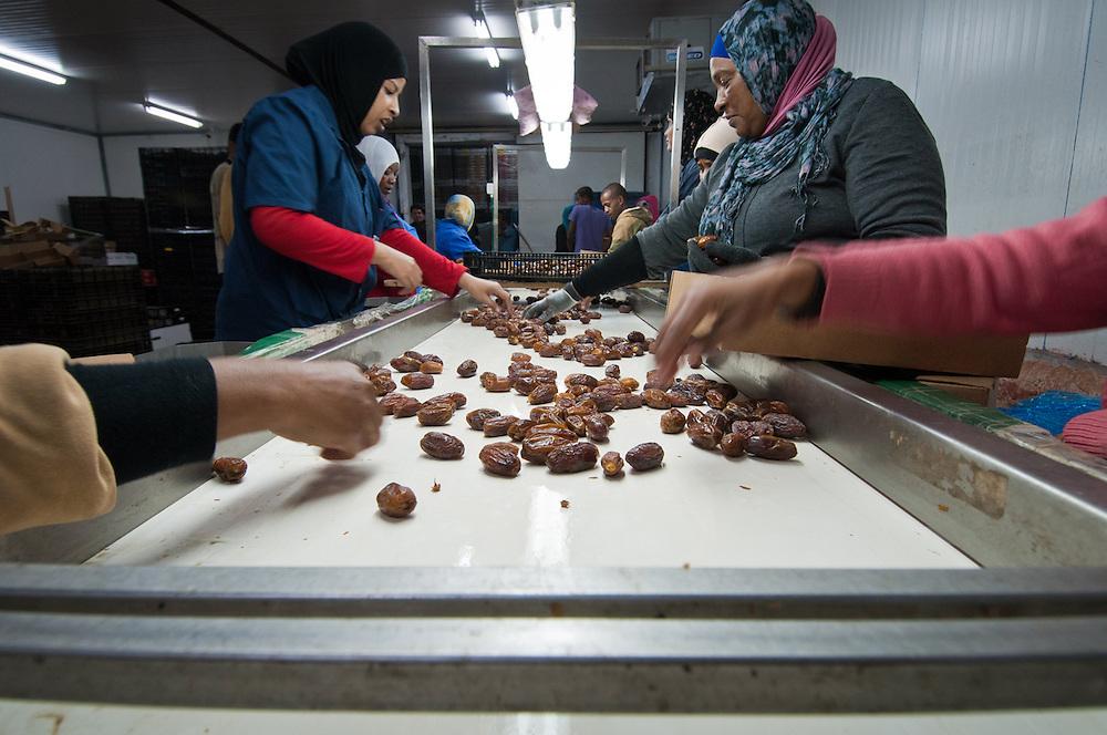 Date processing, Fresh Gate Dates, Jericho, Palestine. 2012.