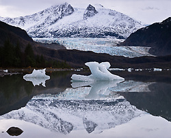 Icebergs float in Mendenhall Lake located at the terminus of the Mendenhall Glacier. Also pictured in the background is Mount Wrather. The Mendenhall Glacier runs roughly 12 miles, originating in the Juneau Icefield, near Juneau, Alaska. The glacier is located 12 miles from downtown Juneau. Each year, 465,000 curise ship passengers visit the Mendenhall Glacier.