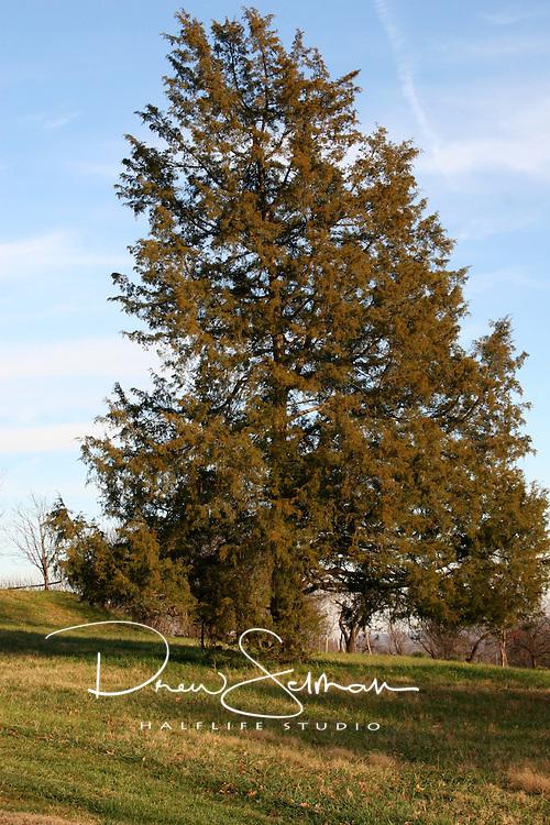 Late Fall in Monticello, VA