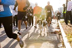 Bayside Trail 5K, Joan Samuelson runs in race