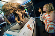 Ingrid Verwood and Mao Ishiguron look at Lyuba. Mammoths: Ice Age Giants at the Natural History Museum (opens 23 May 2014)<br /> It includes huge fossils and life-size models of mammoths and their relatives tower above you and meet Lyuba, the world's most complete mammoth, as she takes centre stage in the exhibition for her first appearance in western Europe. She is the star of the show, a baby woolly mammoth discovered in Russia's Yamal Peninsula of Siberia in May 2007. She died around 42,000 years ago at just one month old. Her body was buried in wet clay and mud which then froze, preserving it until she was found by reindeer herder Yuri Khudi and his sons, as they were searching for wood along the frozen Yuribei River thousands of years later. The exhibition also includes some of the best-known species, from the infamous woolly mammoth and the spiral-tusked Columbian mammoth to their island-dwelling relative the dwarf mammoth. South Kensington, London.