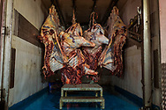 Bodies of a dead fighting bulls hang inside a truck after they were killed by bullfighter Curro de la Casa during a bullfight in Morazarzal, Spain, Saturday, Feb. 28, 2015.