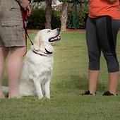 Cadence K9 Dog Training