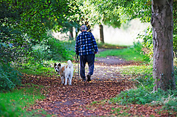 ©Licensed to London News Pictures 10/10/2019.<br /> Sidcup,UK. Elderly man enjoying a walk with his dog, A cold autumnal October morning at Footscray Meadows on the River Cray, Sidcup, South East London. Photo credit: Grant Falvey/LNP