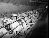1975 - Pig Sheds In Cavan/Monaghan.     (J89)
