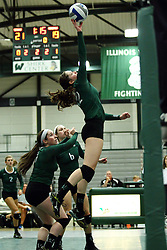 22 September 2015:  Anne Cummings(22) during an NCAA womens division 3 Volleyball match between the Augustana Vikings and the Illinois Wesleyan Titans in Shirk Center, Bloomington IL