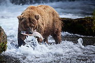 Brooks Falls, Katmai National Park