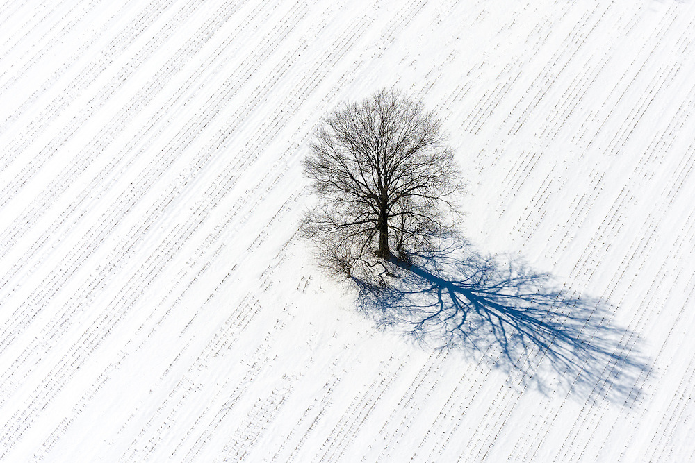 A lone tree in a snow covered corn field.
