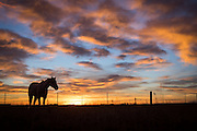 Horse grazing during the sunrise in southeastern Wyoming.