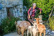 Novice nun, Maria, feeds goats belonging to the Serbian Orthodox St. John of Kronstadt monastery, near the village of Korita, Republika Srpska, Bosnia and Herzegovina.