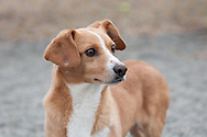 Clancy is an alert little dog at the shelter.
