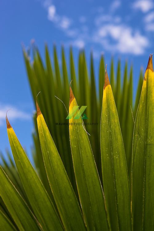 Hotel Secrets de la cadena AmResorts, en la Bahia Petempich, Puerto Morelos 77580 Quintana Roo