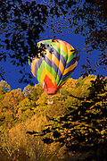 Photo by Phil Grout..A lone hot air balloon drifts eastward near the village of Patapsco.as  the unidentified balloonist and at least one passenger get a.treetop view of the peaked fall colors which blanketed Carroll.County this week.