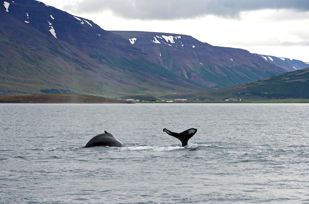 Taken in Eyjafjörðu, N. Iceland
