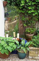 Water feature and mirror with hostas in pots
