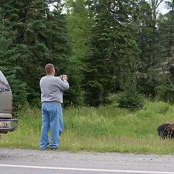 Moose watching on US Route 3 in Pittsburg, New Hampshire.