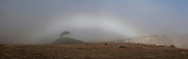 Fogbow Panoramic at Bodega Head, Sonoma Coast, California