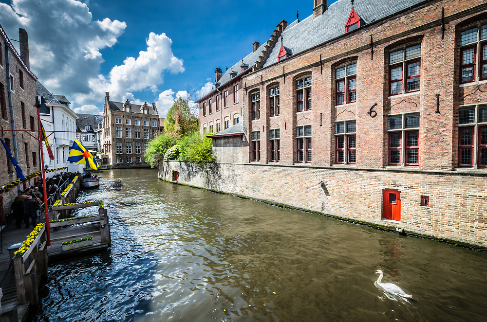 A swan swims up the Groenerei canal in Bruges.