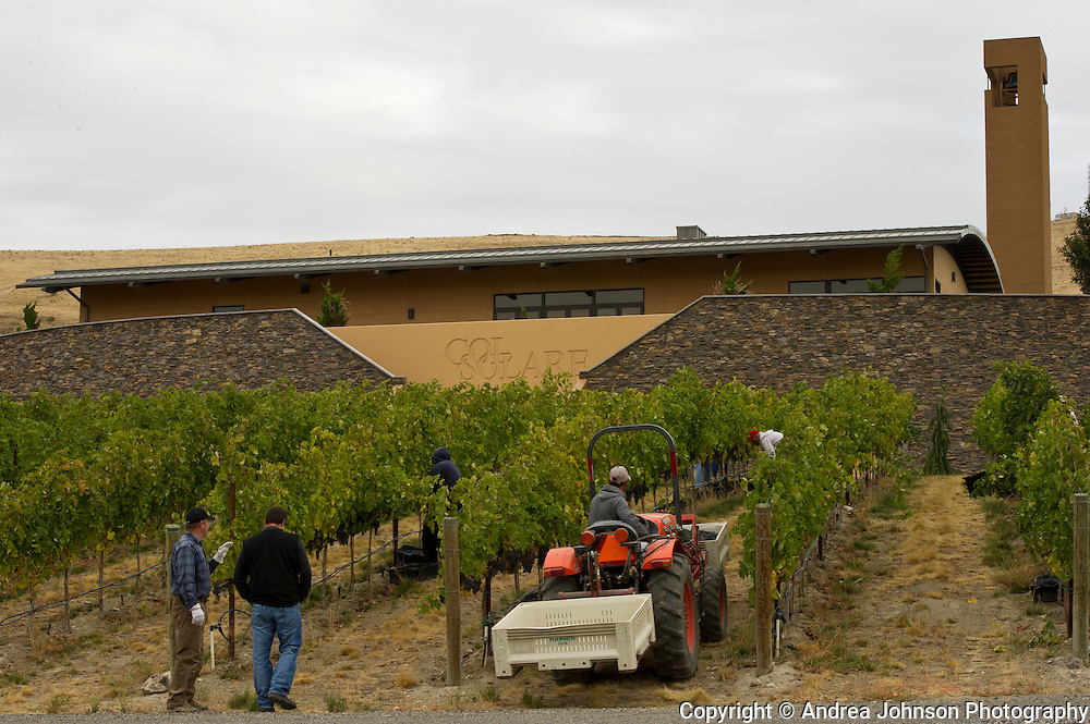Col Solare harvest 2011, Red Mountain AVA, Washington