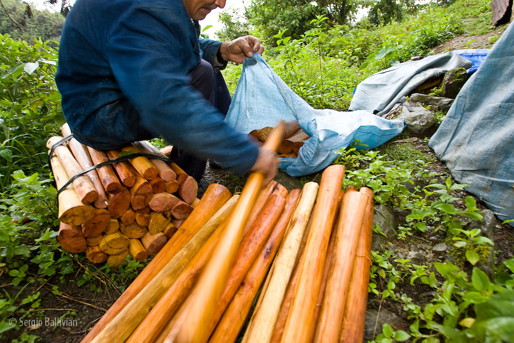 Artisan woodcarvers wrapping axe handles for transport to market in the tropical jungle region of the Yungas region near the town of Coroico, three hours from La Paz, Bolivia.