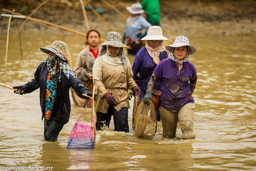 23 APRIL 2014 - CHIANG SAEN, CHIANG RAI, THAILAND: Women walk through a fishing pond near Chiang Saen. The pond was being emptied for the rest of the dry season and hundreds of people were trying to catch fish. Chiang Rai province in northern Thailand is facing a drought this year. The 2014 drought has been brought on by lower than normal dry season rains. At the same time, closing dams in Yunnan province of China has caused the level of the Mekong River to drop suddenly exposing rocks and sandbars in the normally navigable Mekong River. Changes in the Mekong's levels means commercial shipping can't progress past Chiang Saen. Dozens of ships are tied up in the port area along the city's waterfront.               PHOTO BY JACK KURTZ