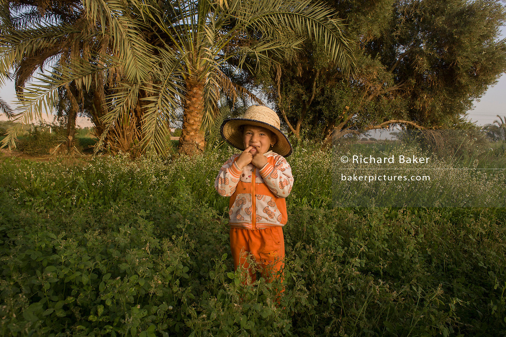 A farmer's young daughter stands in front of date palms in fertile fields where agriculture is important for survival, at Bedhal near Dahkla Oasis, Western Desert, Egypt. Dakhla Oasis consists of several communities, along a string of sub-oases. The main settlements are Mut (more fully Mut el-Kharab and anciently called Mothis), El-Masara, Al-Qasr, Qalamoun, together with several smaller villages. Some of the communities have identities that are separate from each other. Qalamoun has inhabitants that trace their origins to the Ottomans.