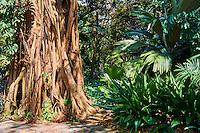 Singapour, le jardin botanique de Singapour, patrimoine mondial de l'Unesco // Singapore, the botanic garden, Unesco World Heritage