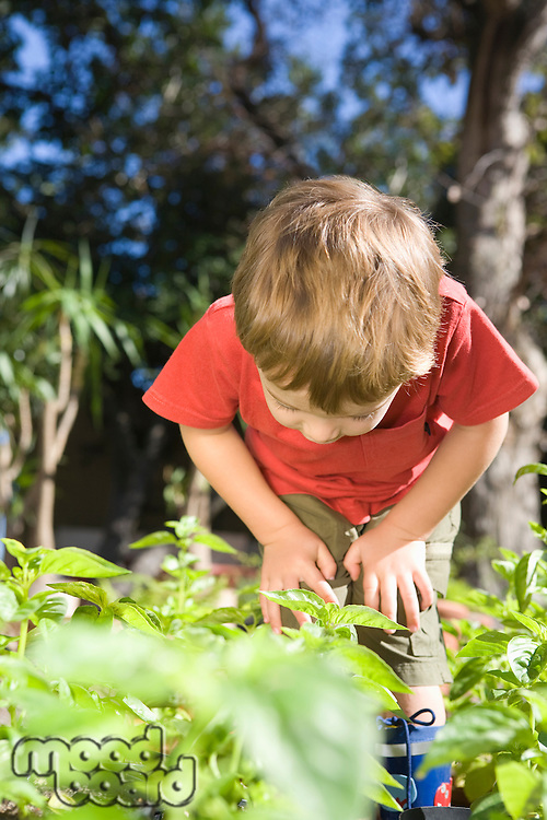 2 Year old bends forward to examine undergrowth in vegetable garden