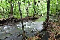 Waldbach Okna, Morske Oko Reservat, Ost-Slowakei / Creek Okna, Morske Oko Reserve, East Slovakia