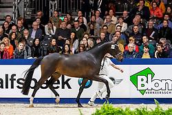 533, Mister Diamond van de Molenkouter<br /> KWPN hengstenkeuring - 's Hertogenbosch 2020<br /> © Hippo Foto - Dirk Caremans<br /> 31/01/2020