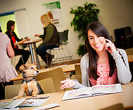 Corporate portraits and photography for Pets at Home Head Office by commercial photographer Ioan Said Photography.