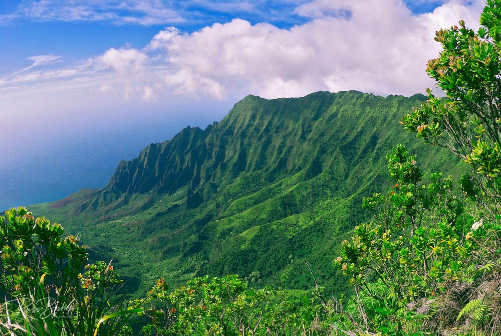 Kalalau Valley from the Pihea Trail, Koke'e State Park, Island of Kauai, Hawaii