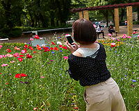 Photographer working the wildflowers at Shinjuku Chuo Park in Tokyo. Image taken with a Leica CL camera and 23 mm f/2 lens.