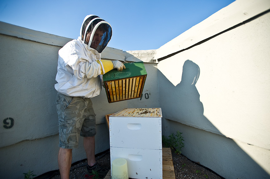Chase Emmons, Bee Keeping, Brooklyn Grange Brooklyn Grange