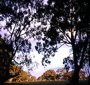 Gum trees and fields rural Victoria, Australia