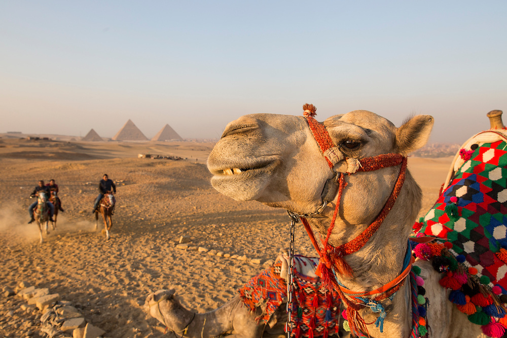 Egypt, Cairo, Horse riders approach tourists' camel standing in front of Great Pyramid of Giza in Sahara Desert at sunset