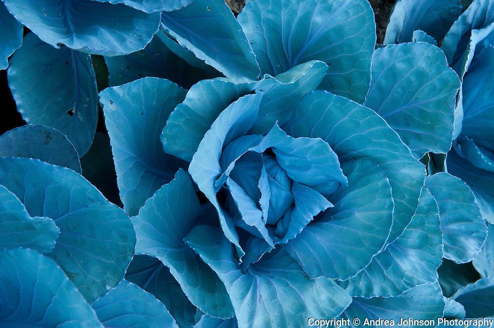 Herb and flower gardens around Somerston Vineyard, Napa, California