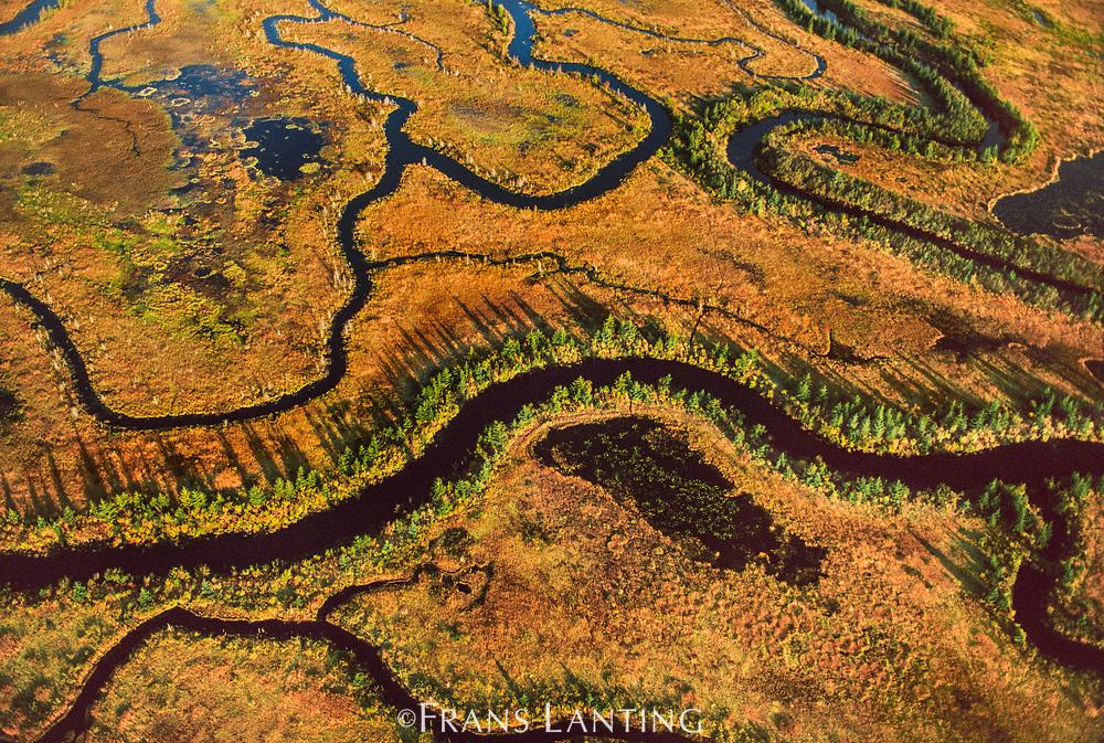 Wetlands (aerial), Copper River Delta, Alaska
