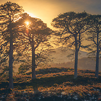 The sun rising over a clutch of Scots pine between Loch Beinn a Mheadhoin and Loch Affric, a wee slice of the wonderful ancient Caledonian forest spread up and down the Glen.