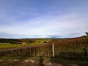 Dalrymple's Estate Vineyard