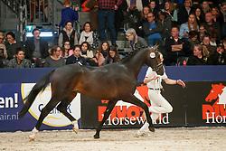 535, Kostolany B<br /> KWPN Stallionshow - 's Hertogenbosch 2018<br /> © Hippo Foto - Dirk Caremans<br /> 03/02/2018