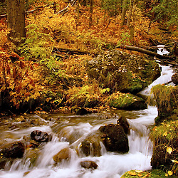 Southcentral Alaska's Falls Creek during autumn.