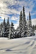 USA, Idaho, Valley County, Tamarack Resort, Trees and Snow on West Mountain