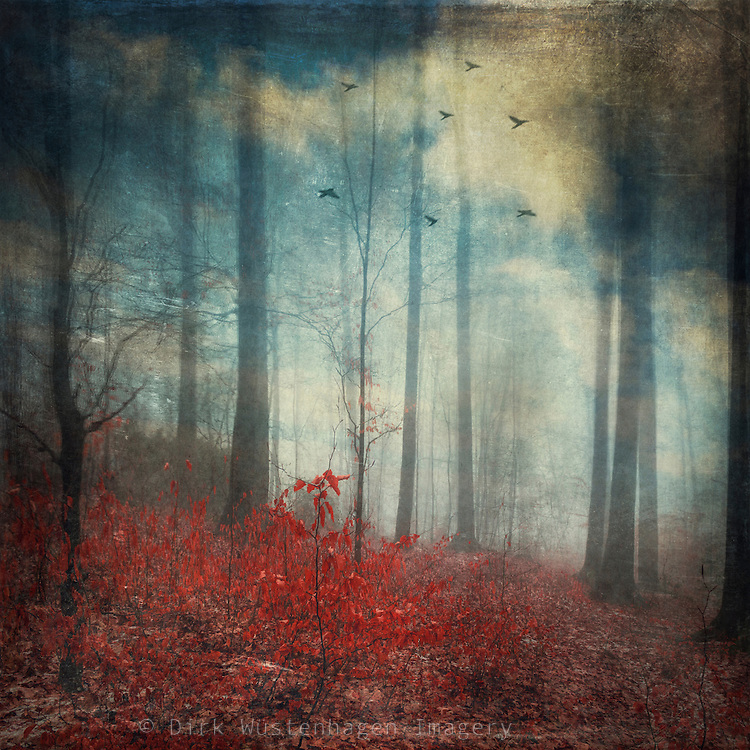 surreal forest scenery with red leaves and a blue sky - manipulated photograph<br />