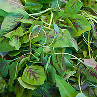 Purple and green Asian amaranth greens.