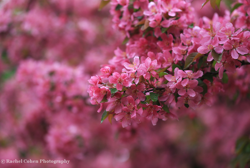 &quot;Laughter in the Rain&quot;<br />