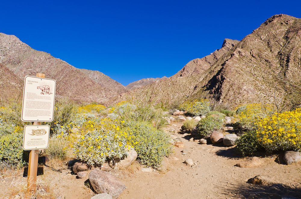 Mountain lion and rattlesnake warning sign, Borrego Palm Canyon, Anza-Borrego Desert State Park, California USA